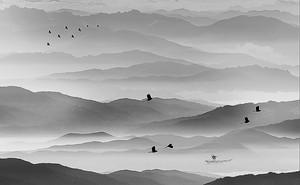 Силуэты птиц над горами