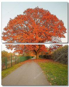 Осенний дуб в конце дороги