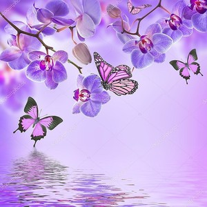 Тропические орхидеи и бабочки над водой