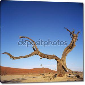 Пустыня высохшее дерево