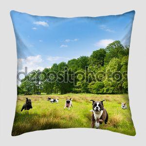 Счастливый собак, шумный в поле