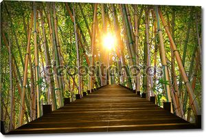 wooden boardwalk in bamboo forest
