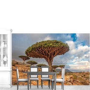 Дракон деревья на dixam плато, остров Сокотра, Йемен