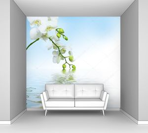 Красивая белая орхидея и ее отражение