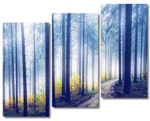 Тропа в туманном лесу