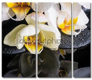 Красивый спа Настройка Белая орхидея (фаленопсис), дзен камни