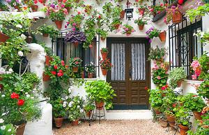 Горшочки с цветами в уютном дворике