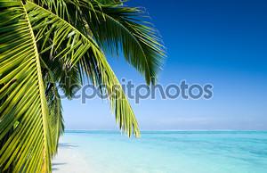 Дерево пальмы листьев на тропическом пляже