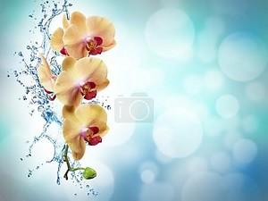Желтые цветы орхидеи