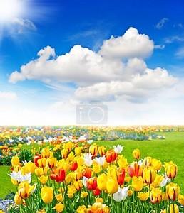 Тюльпаны цветы. Весенний пейзаж
