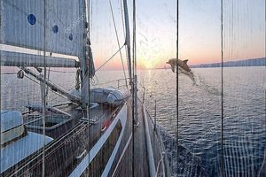 Прыжки дельфина вблизи парусной лодки