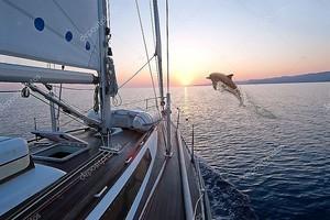 Doplhin прыжки вблизи парусная лодка