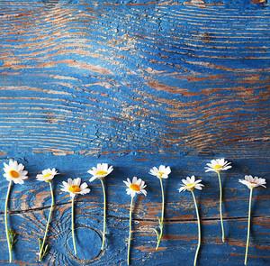 красивые цветы границы