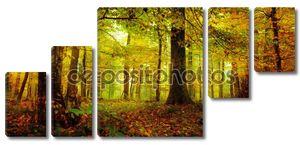 Зачарованный лес октября утром в Баварии