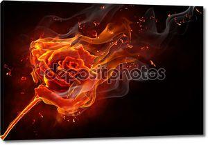 Роза в огне