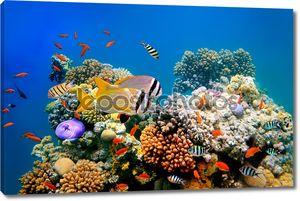 Тропическая рыба на коралловом рифе