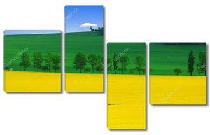 Желтый рапс, зеленая пшеница и голубое небо