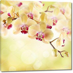 Желтая орхидея с красными серединками