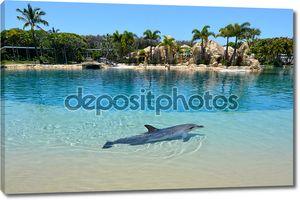дельфин в неволе в морском мире Голд-Кост Австралия