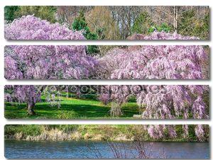 Расцвет весны