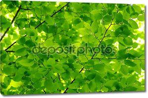фон листьев
