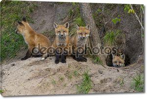 Red Fox наборы на их ден