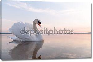 Лебедь на глади озера