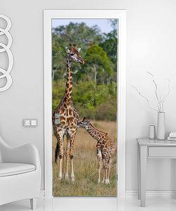 Семейство жирафов