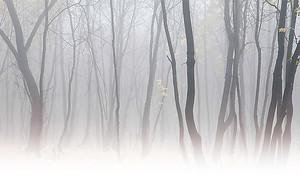 Стволы в тумане