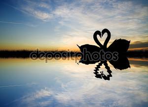 Закат и лебеди