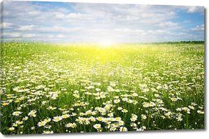 Цветок на поле