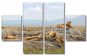 гордость львов