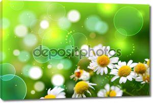 Зеленая трава и ромашки в природе