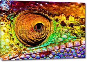 рептилий глаз