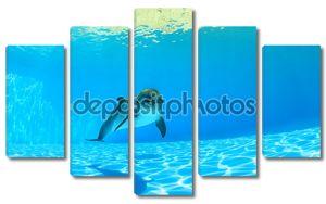 дельфин под водой