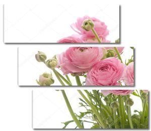 Букет бледно-розового Ранункулуса (Персидский лютик)