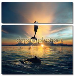 пара Прыжки дельфинов