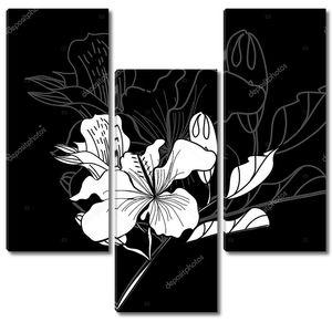 черно-белый фон