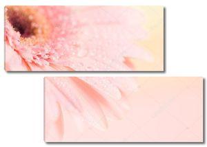 Close up and selective focus of sweet pink  Gerbera flower