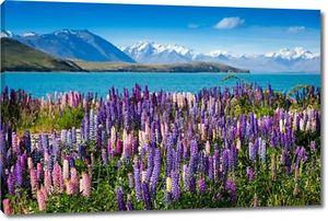 Озеро Текапо с люпины цветение