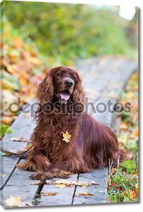 Собаки в Осенний парк