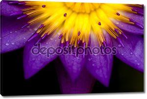 Фиолетово-желтый цветок