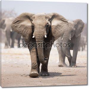 Стадо слонов в летнюю жару