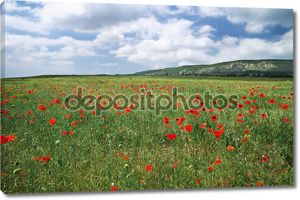 Красивый пейзаж. поле с красными маками