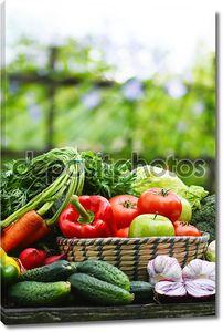 Свежих органических овощей в плетеную корзину в саду