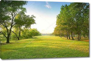 красивый утренний свет в общественный парк с поле зеленой травы