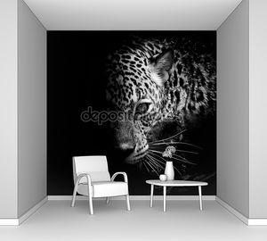 Портрет Ягуара в полутени