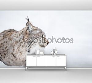Рысь голова в профиль