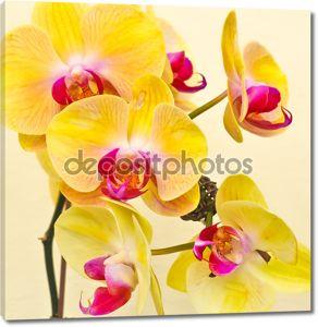 Фиолетовый, белый, желтые орхидеи