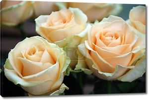 Персик розы лавина